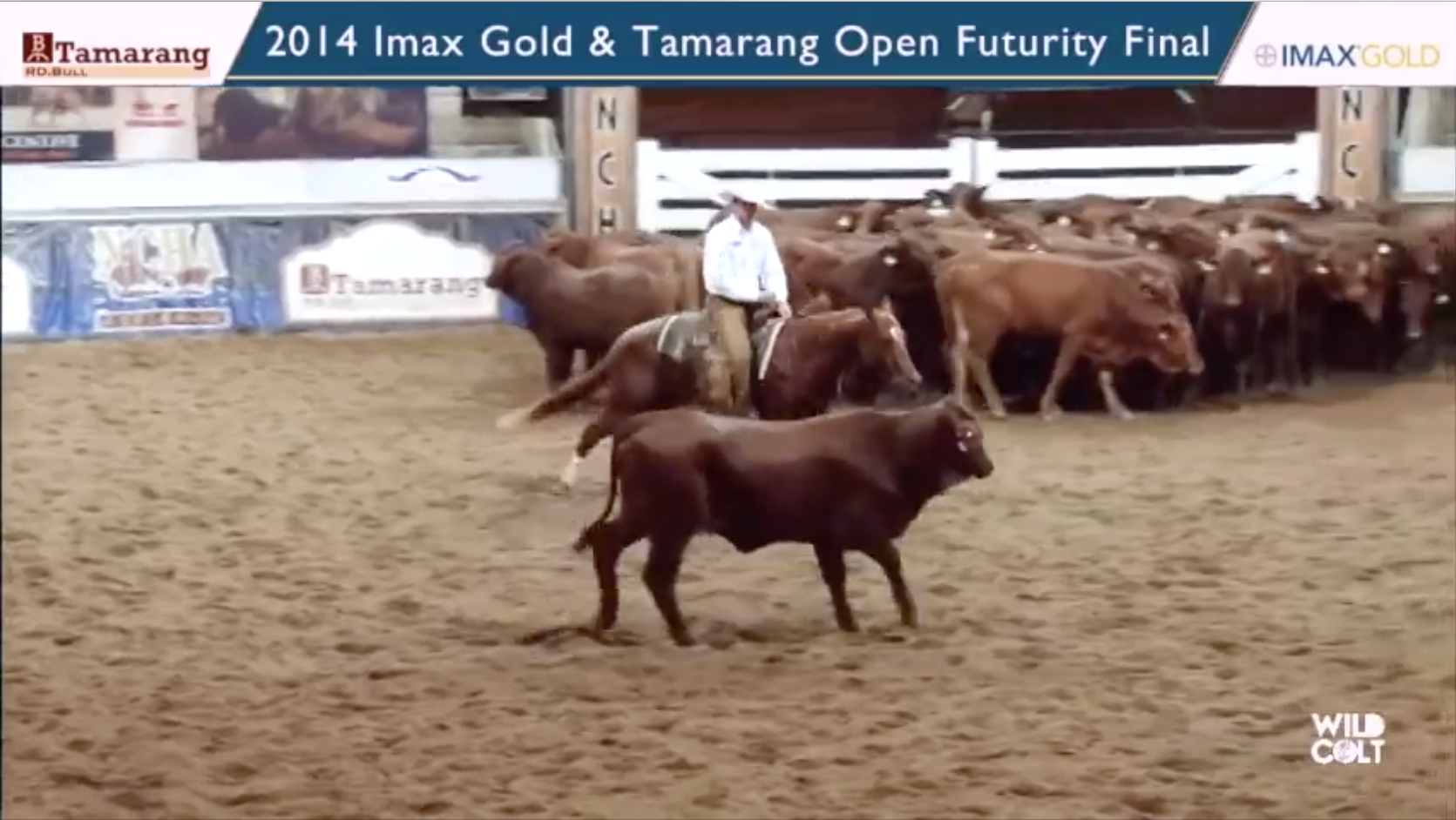 Winner of the 2014 NCHA Australia IMAX Gold Tamarang Futurity